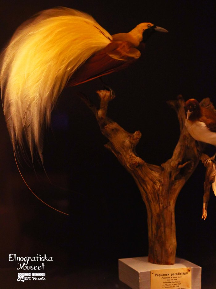 Burung indah dari Papua