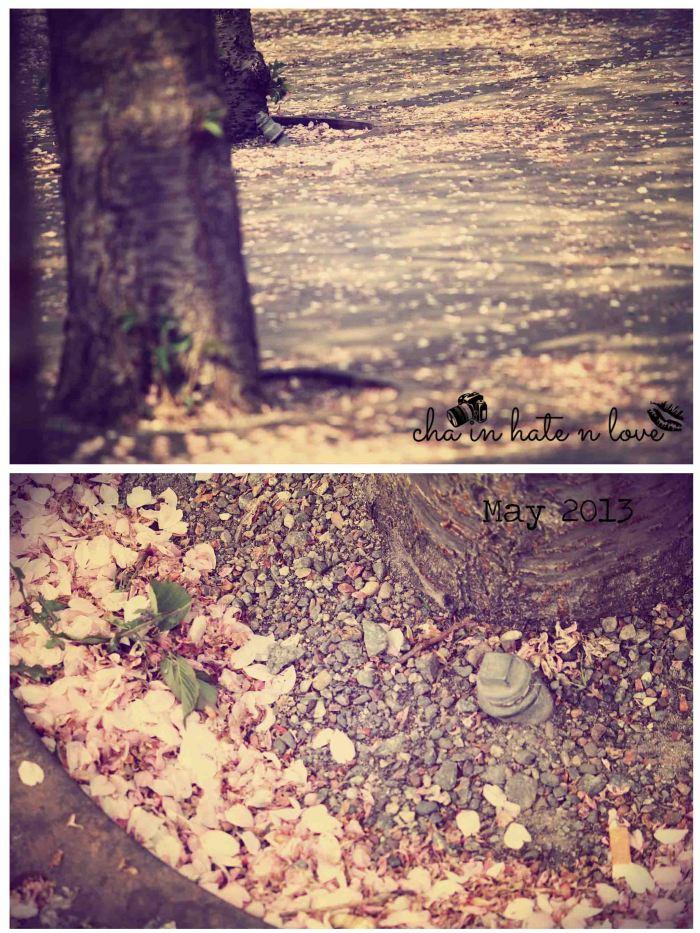 Guguran bunga Sakura