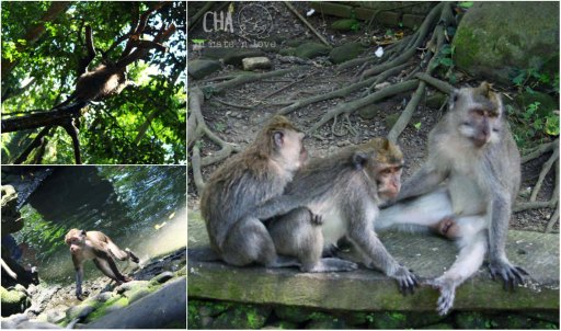 Tingkahnya monyet- monyet itu, lucu amat sih