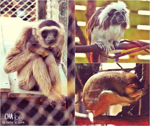 Monyet- monyetan ... eh beneran dink!